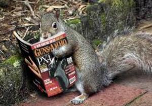 libertarian-squirrels