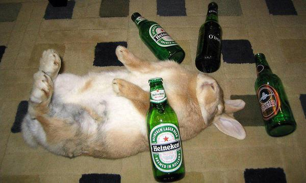 Bayes Bunny iz trying to cool off after reading too many scientific papers.