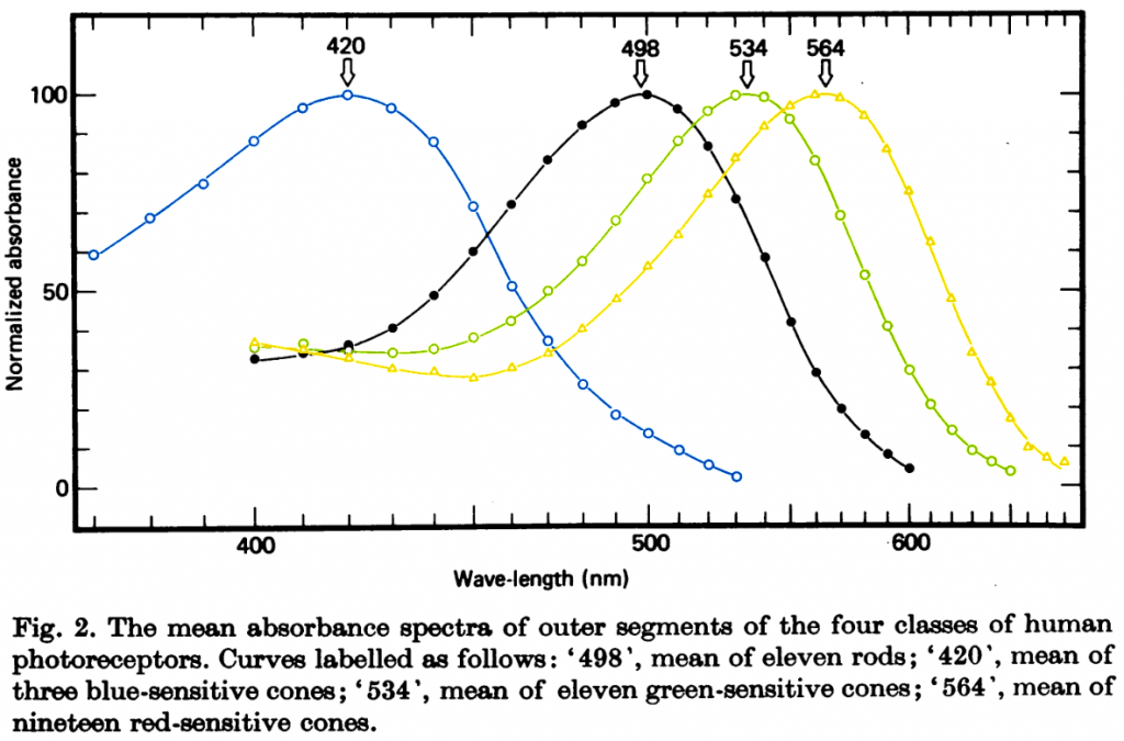 Figure 2, from Bowmaker & Dartnall 1980. Cone response curves have been colourized to approximately their peak colour response.
