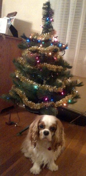 Baxter Xmas tree 2013