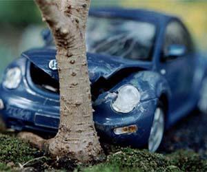 Car crash bonsai tree