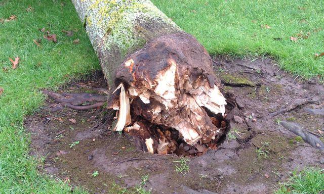 The tree fell because of the big bang