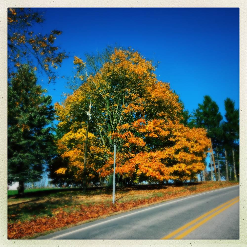 Fall Colors, Philipsburg PA, Nov 1, 2016