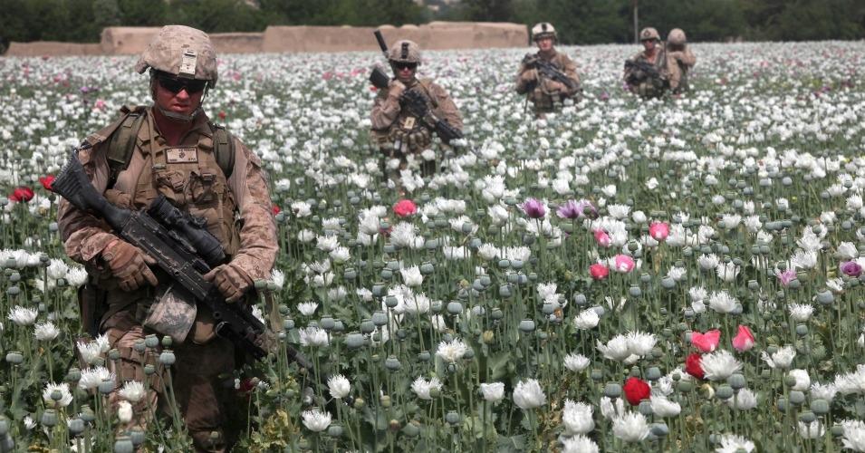 US Marines wading through opium poppies