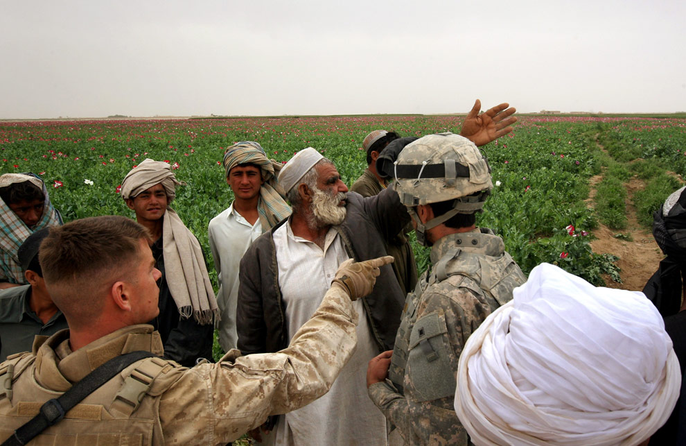 Marines discussing poppies with a farmer