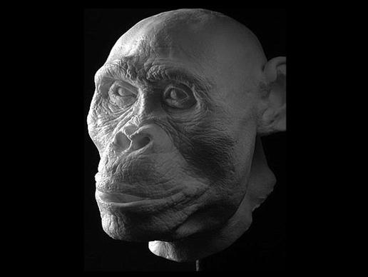 storymaker-early-human-ancestors-faces2-515x388