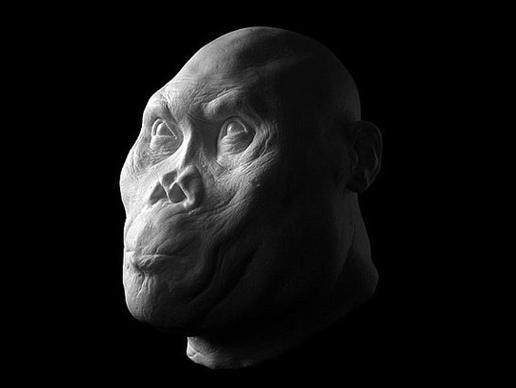 storymaker-early-human-ancestors-faces5-515x388