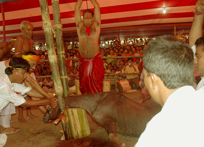 animal sacrifice 4