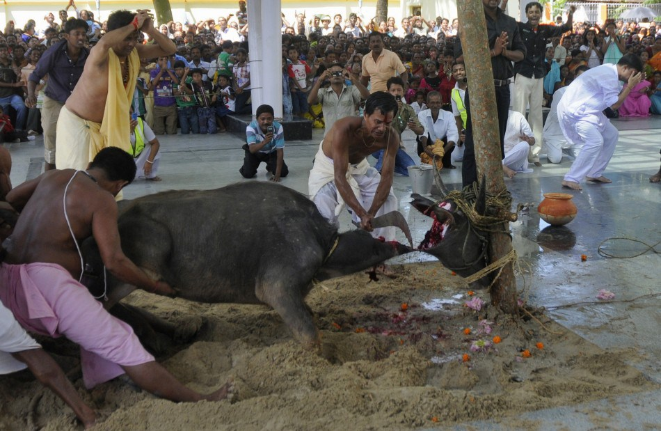 animal-sacrifice-by-hindus2