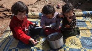 syrian 6