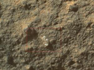 MartianFlower