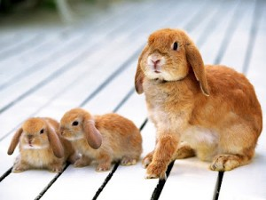 cute-rabbit-wallpaper-9