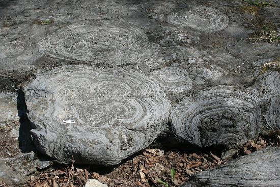 1024px-Stromatolites_hoyt_mcr1